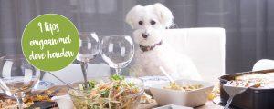 Omgaan met dove hond - tips